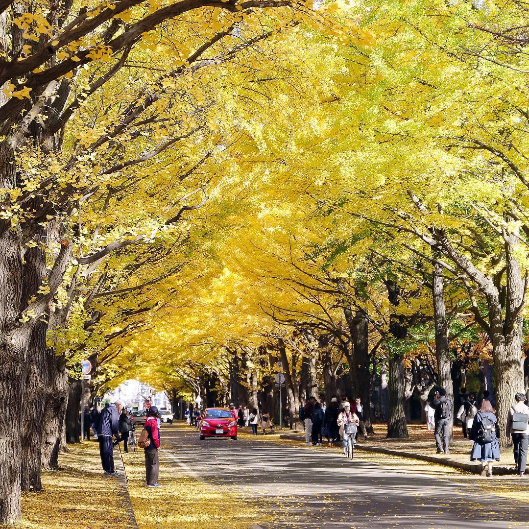 HU Autumn
